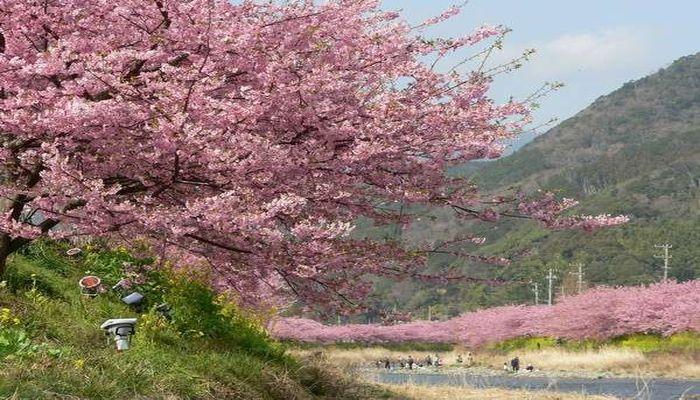 河津桜祭りと金目鯛料理が楽しめる東伊豆の宿