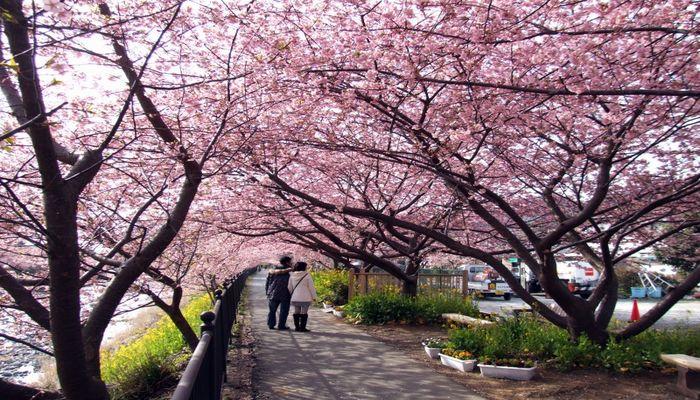 河津桜と温泉が楽しめる宿