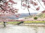 河津桜 ペットと泊まれる宿
