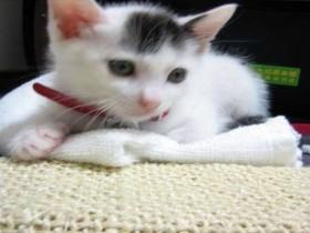 猫と泊まれる宿|岩手県 網張温泉 玄武風柳亭