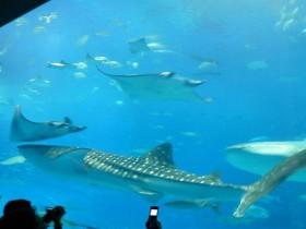 美ら海水族館に近い民宿