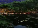 伊豆大川ほたる鑑賞の夕べ