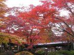 強羅環翠楼の紅葉